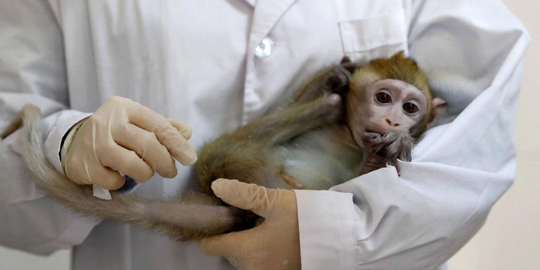 Κινέζοι επιστήμονες για πρώτη φορά κλωνοποίησαν γενετικά τροποποιημένες μαϊμούδες