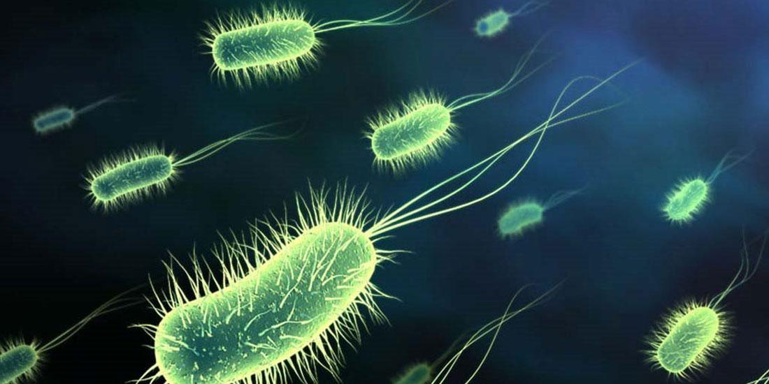 Ανακαλύφθηκαν στο ανθρώπινο έντερο σχεδόν 2.000 άγνωστα έως τώρα είδη βακτηρίων!