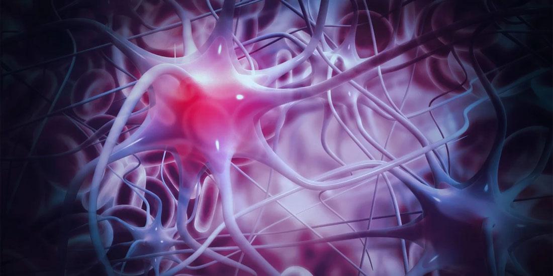 Νέοι νευρώνες αναπτύσσονται στον ανθρώπινο εγκέφαλο έως τα βαθιά γεράματα, αλλά πολλοί λιγότεροι στην περίπτωση Αλτσχάιμερ