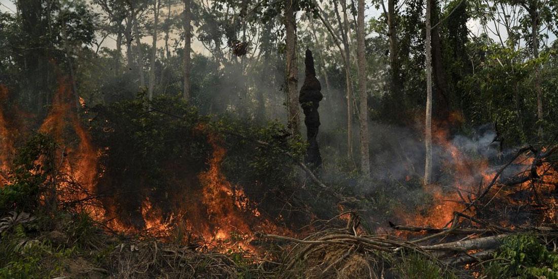 Μελέτη συνδέει τις πυρκαγιές στον Αμαζόνιο με αυξημένα αναπνευστικά προβλήματα των παιδιών στη Βραζιλία