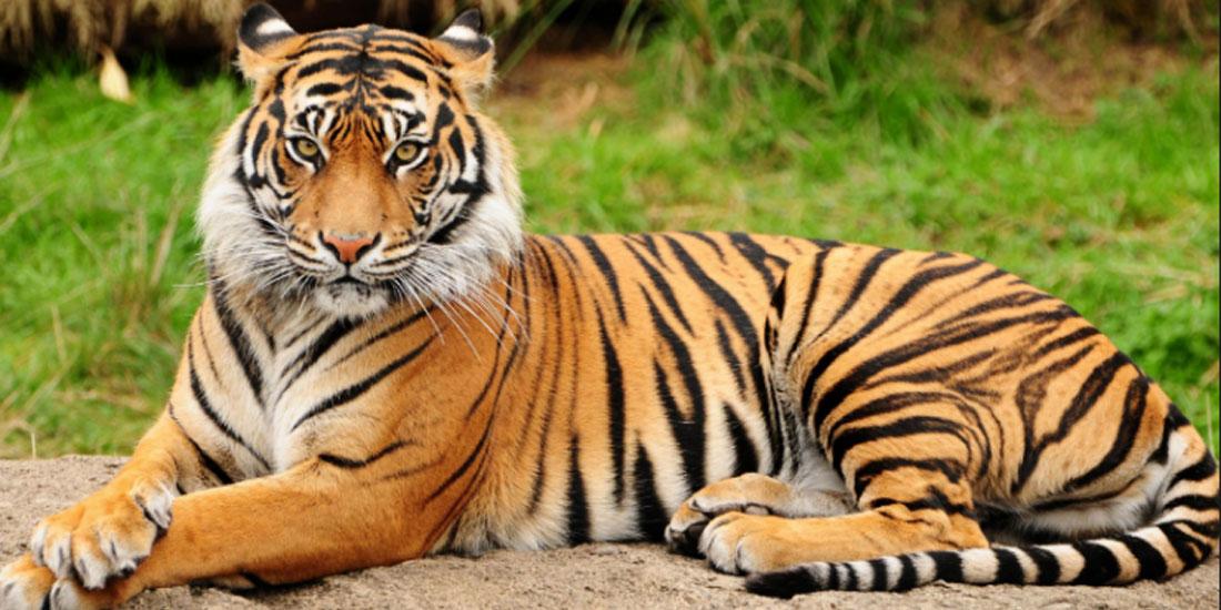 WWF: Η δραματική μείωση της άγριας ζωής ευθύνεται για πάνω από το 60% όλων των πρόσφατων πανδημιών και επιδημιών