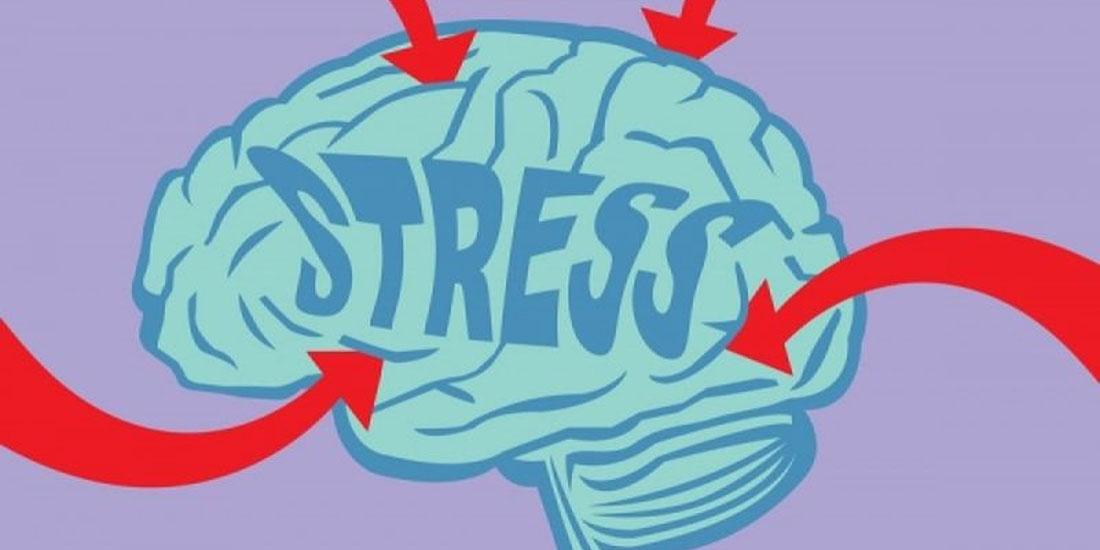 Έρευνα: Νέα δεδομένα στην αλληλεπίδραση της κορτιζόλης με τον ανθρώπινο εγκέφαλο