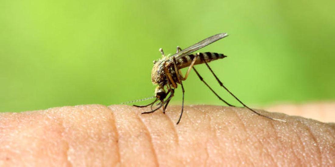 Απειλητικός ακόμη, ο ιός του Δυτ. Νείλου