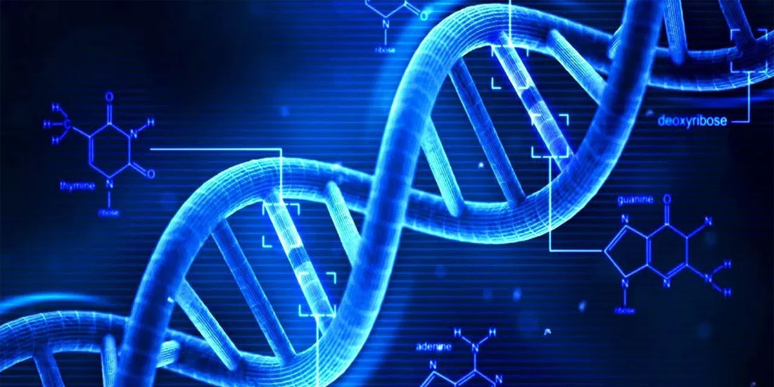 Προς αποκωδικοποίηση της γήρανσης οδεύουν ερευνητές του ΙΜΒΒ