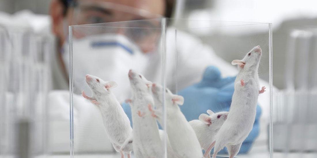 Κινέζοι επιστήμονες δημιούργησαν υγιή ποντίκια από γονείς ιδίου φύλου!