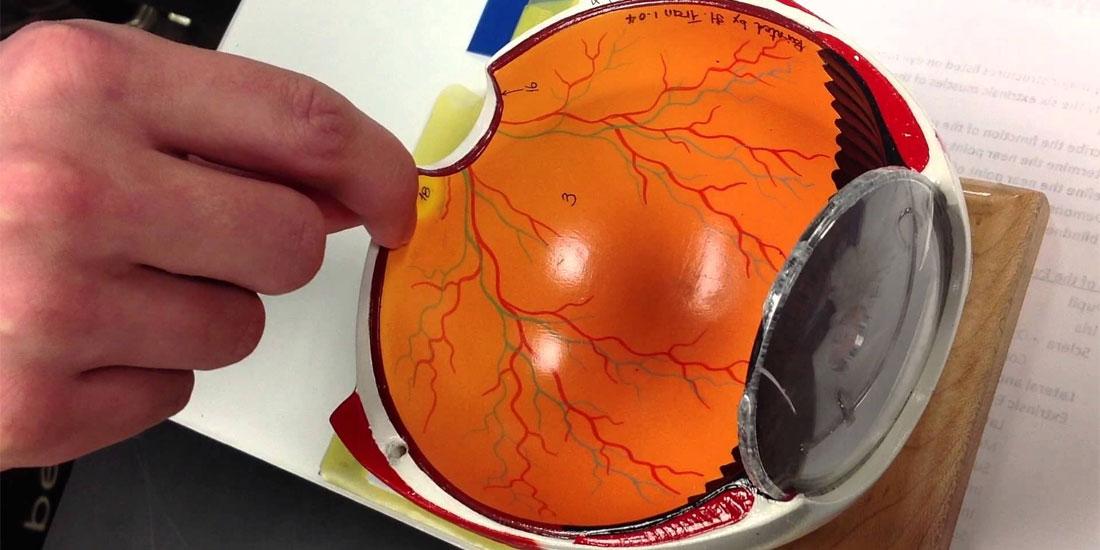 Ισχυρά οφθαλμικά οφέλη και σταθερότητα αποτελέσματος θεραπείας για την ηλικιακή εκφύλιση της ωχράς κηλίδας